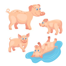 Adult Pig With Tree Piglets On...