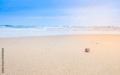 a little hermit crab on the beautiful beach , background
