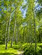 Blocksteinheide bei Gmünd, Österreich, NIederösterreich, Wald
