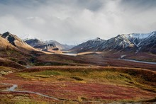 Fall Color On The Alaska Tundr...