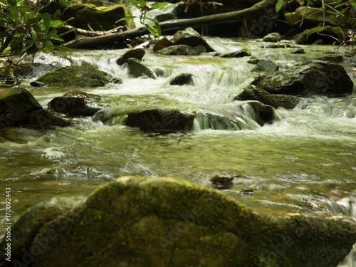 Fototapeten Forest river Stream 008