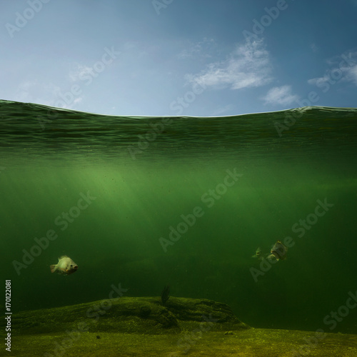 Fotografía  Underwater, fishing background with copy space