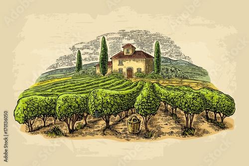 Fototapeta winnica   wiejski-krajobraz-z-willa-polami-winnic-i-wzgorzami-grawerowanie-wektorowe