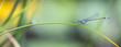 canvas print picture - Libellenpanorama