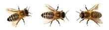 Group Of Bee Or Honeybee On Wh...