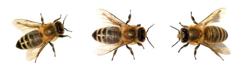 skupina pčela ili pčela na bijeloj podlozi, medonosne pčele