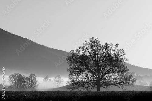czarny-i-bialy-krajobraz-piekny-drzewo-w