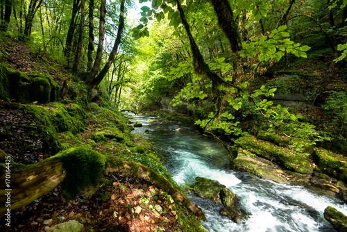 Photo Wald an der Loue im Franche Comté