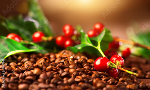 Stickers pour porte Salle de cafe Coffee. Real coffee plant on roasted coffee background