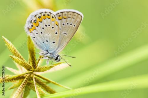 Foto op Aluminium Oranje The butterfly sits on a green stalk.