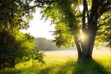 Morgens Nach Dem Sonnenaufgang...