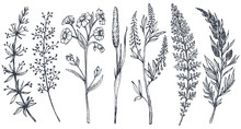 Hand Drawn Wildflowers And Herbs Vector Set