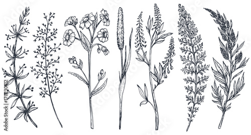 Leinwand Poster Hand drawn wildflowers and herbs vector set