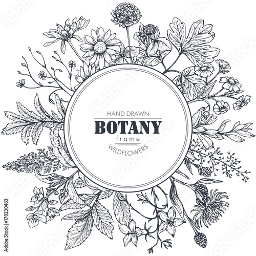 Fototapeta Vector circle frame with herb and wildflower elements obraz