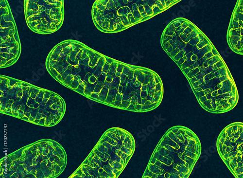 Fotografie, Tablou  Mitochondria. 3d image