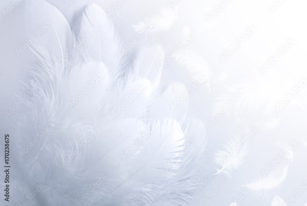 Airy soft fluffy wing bird with white feathers close-up of macro pastel blue shades on white background. Abstract gentle natural background with bird feathers macro with soft focus.