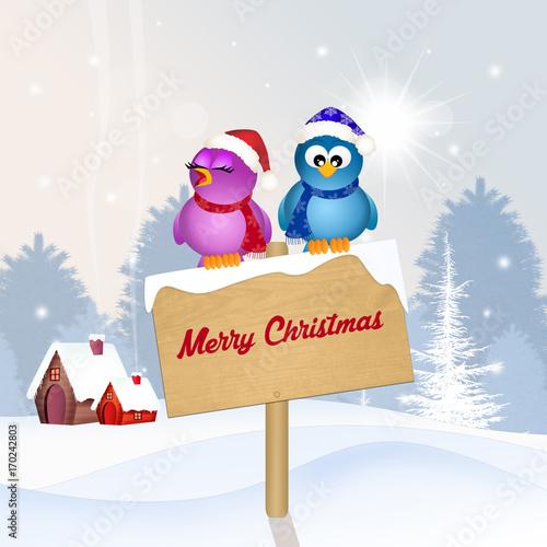 Stampa su Tela birds at Christmas