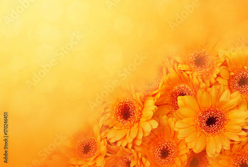 Poster Gerbera Summer/autumn blossoming gerbera flowers on orange background, bright floral card