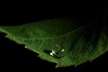 Water Drop On A Green Leaf Mac...