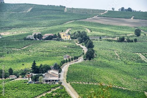 Fotobehang Olijf Oltrepo Piacentino (Italy), rural landscape at summer