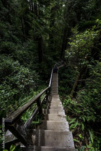 Canvas Prints Bridge Dschungel