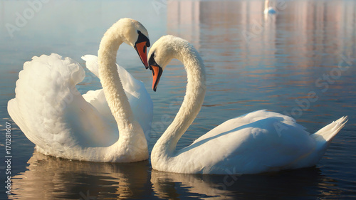 In de dag Zwaan Two white swans. This is Love.