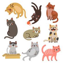 9 Cute Cats