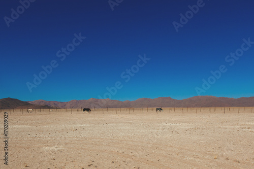 Staande foto Zandwoestijn Namibia desert, Veld, Namib