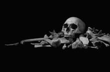 Skull On Pile Bone On Black Background, Dim Light In Halloween Night Style Black And White