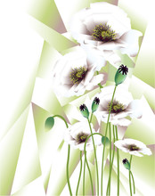 Abstract White Poppies With Seed Pods On Abstract Background