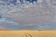 Namibian desert , Veld , Namib
