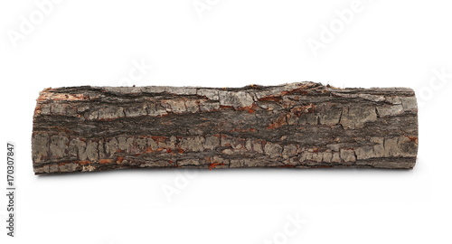 In de dag Brandhout textuur oak stump, log fire wood isolated on white background with clipping path