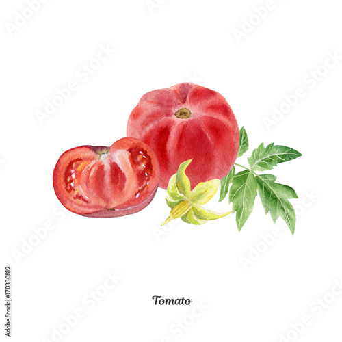 Handpainted watercolor poster with tomato