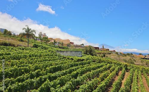 La Matanza de Acentejo, Tenerife