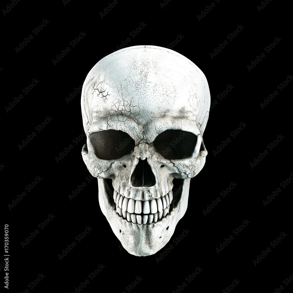 Photo art print human skull on rich colors a black isolated