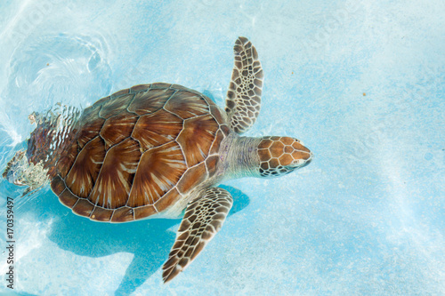 Foto op Canvas Schildpad Green sea turtle. Close-up