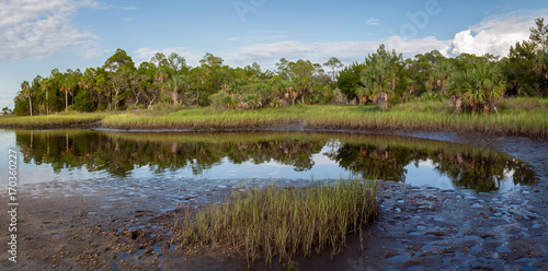 Fényképezés  Panoramic view of the marshes on Florida's Gulf Coast with fiddler crabs