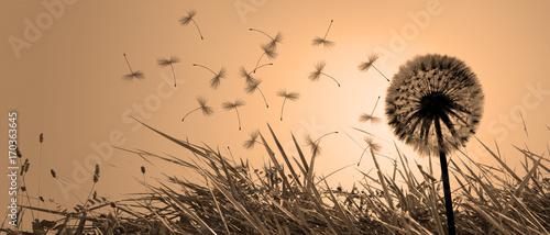 Deurstickers Paardenbloem Schöne Pusteblume beim Sonnenuntergang