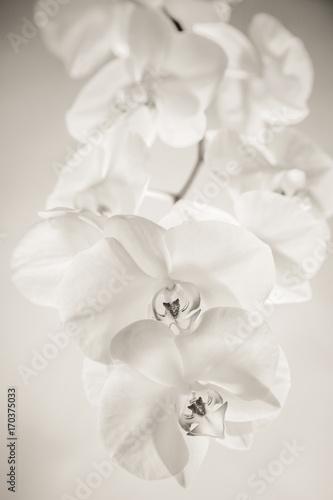 biala-orchidea-na-bialym-tle