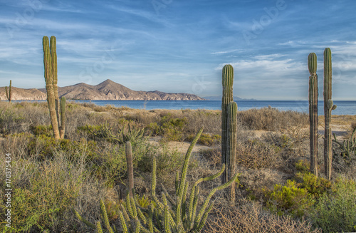 Sea and desert, ensenada de muertos, la paz baja california sur Canvas Print