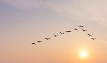 Flock Of Birds At Sunrise Or Sunset Nature Concept