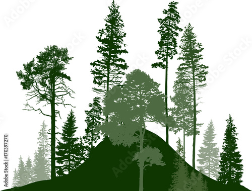 hill with fir trees green forest on white © Alexander Potapov