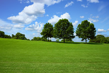 Trees On Hill In Park