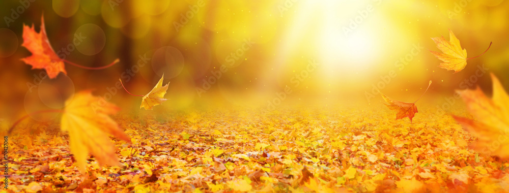 Fototapety, obrazy: Abstract autumn background