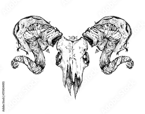 ba5b14aab094b Beautiful goat skull. Drawn by hand. Dark gothic illustration. It can be  used for printing on t-shirts, postcards, or used as ideas for tattoos.