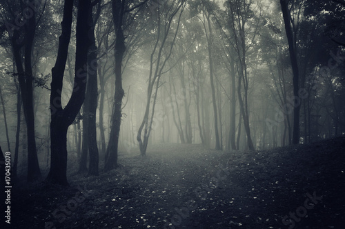 forest path in fog, mysterious atmosphere scenery Wallpaper Mural