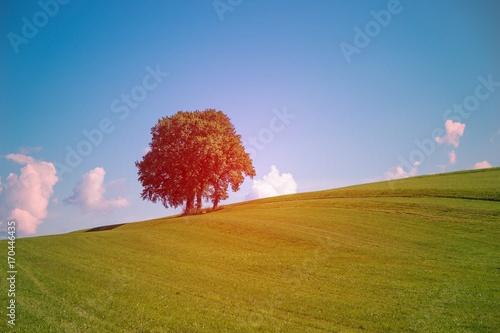 Fotografie, Obraz  Einzelne Baumgruppe auf der Wiese