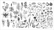 Hand Drawn Vintage Set Of Food: Nuts, Berry, Fruits, Herbs