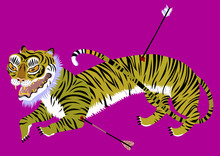 Tiger Wounded By Arrows