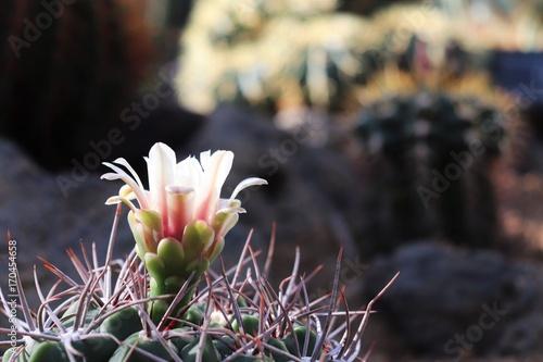 jasny-kaktus-na-ciemnym-tle